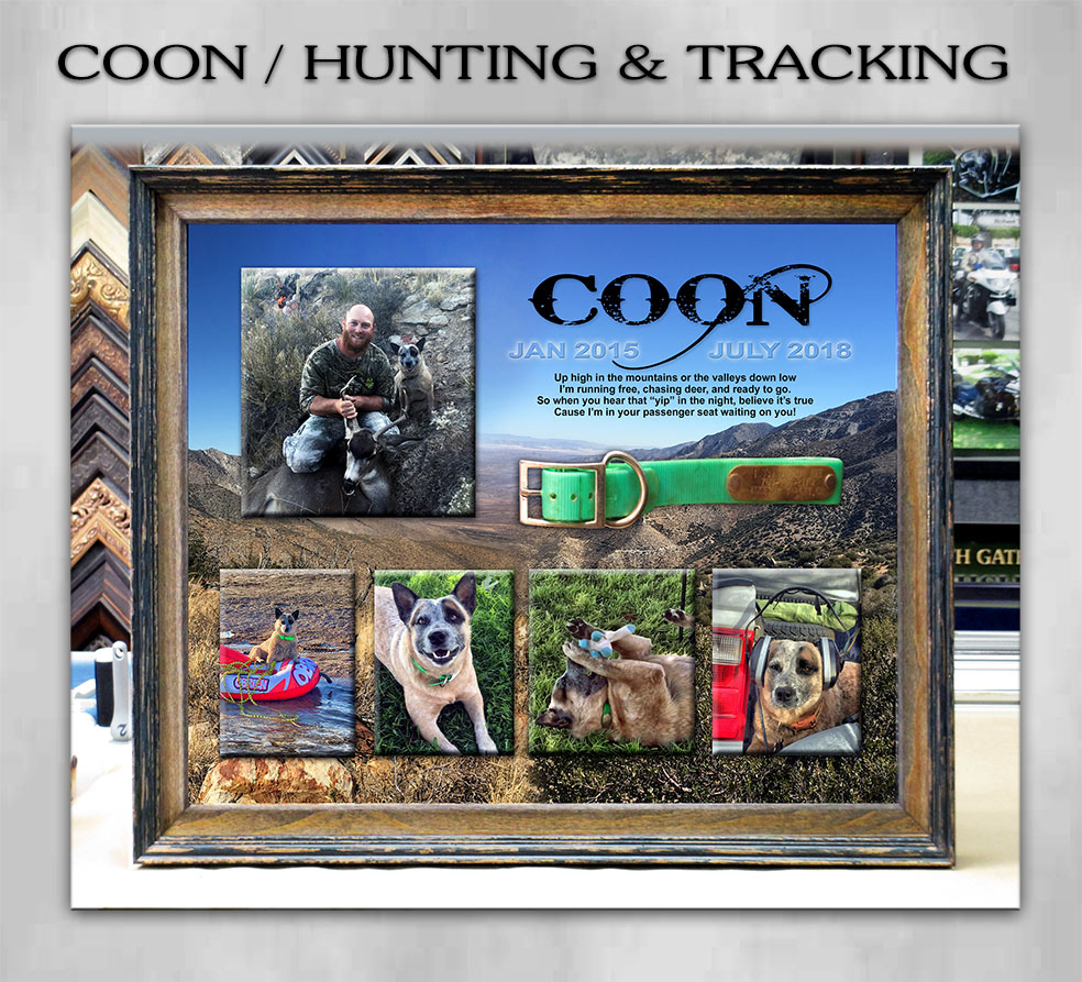 Coon - Hunting and Tracking Dog