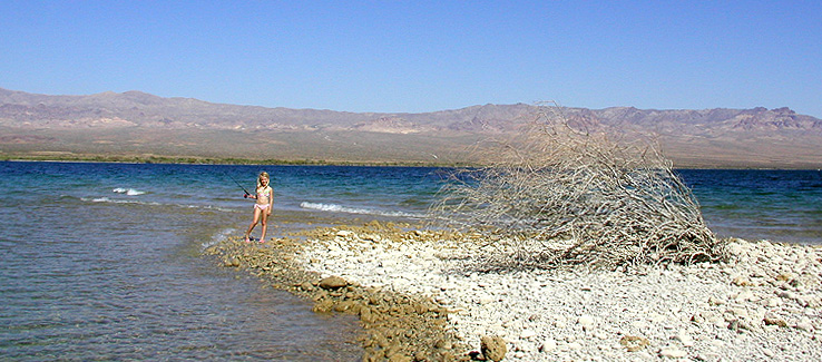 Photos from lake mohave and lake mead for Lake mohave fishing